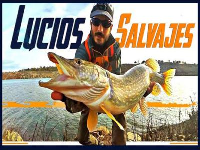 pesca de lucios salvajes