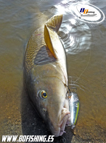 pesca-barbos-spinning