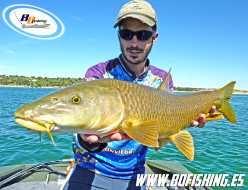 PESCA DEL BARBO a Spinning