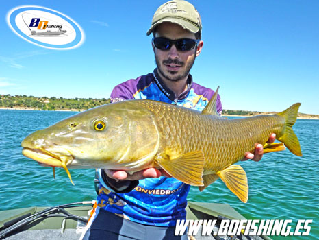 pesca-del-barbo-a-spinning
