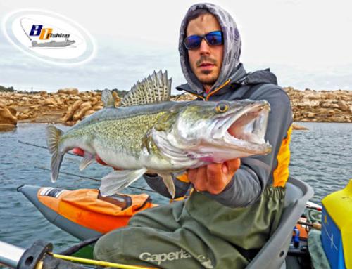Consejos para Pescar Luciopercas