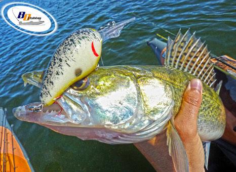 como pescar luciopercas en primavera