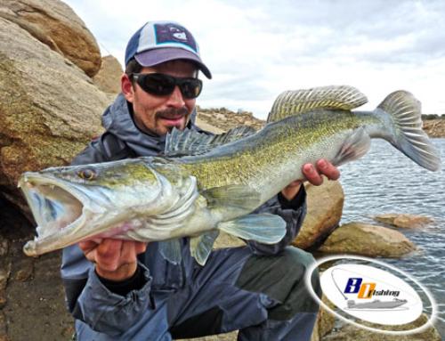Como Pescar Luciopercas (en Freza)