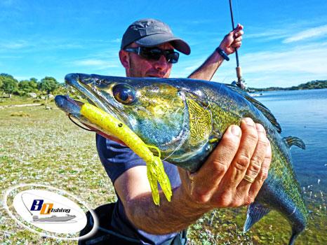 como pescar luciopercas