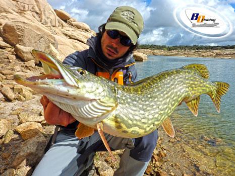 pesca de lucios gigantes