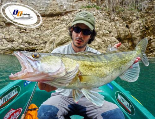 Donde Pescar Luciopercas (en Freza)
