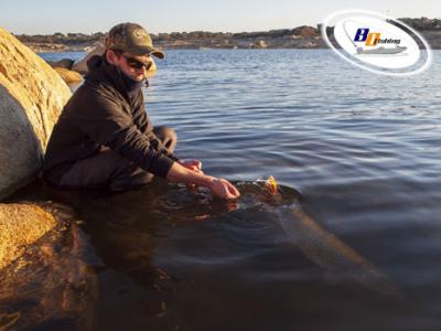 pesca de lucios en freza