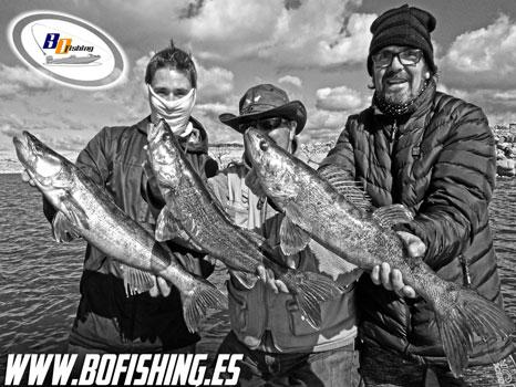 pesca de luciopercas